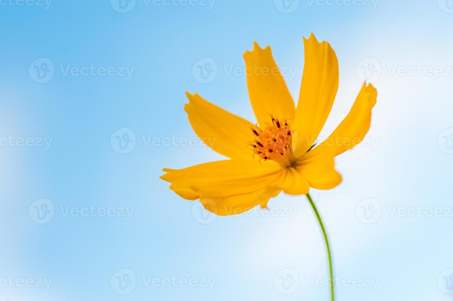 céu azul flor foto
