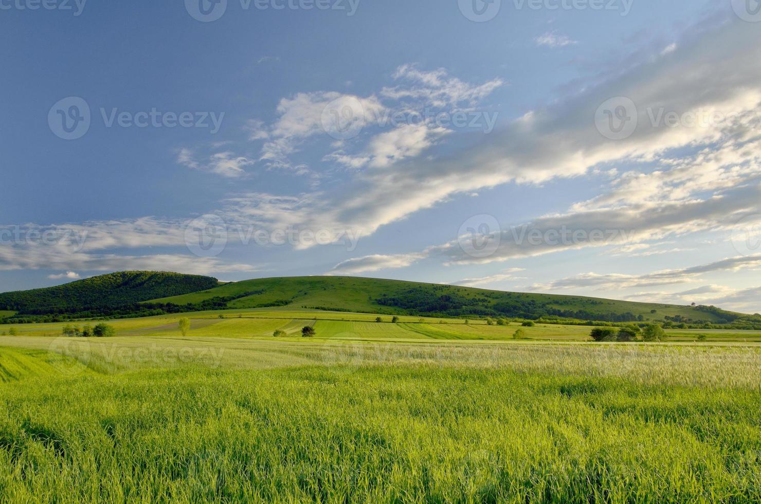 campo verde e céu azul brilhante foto