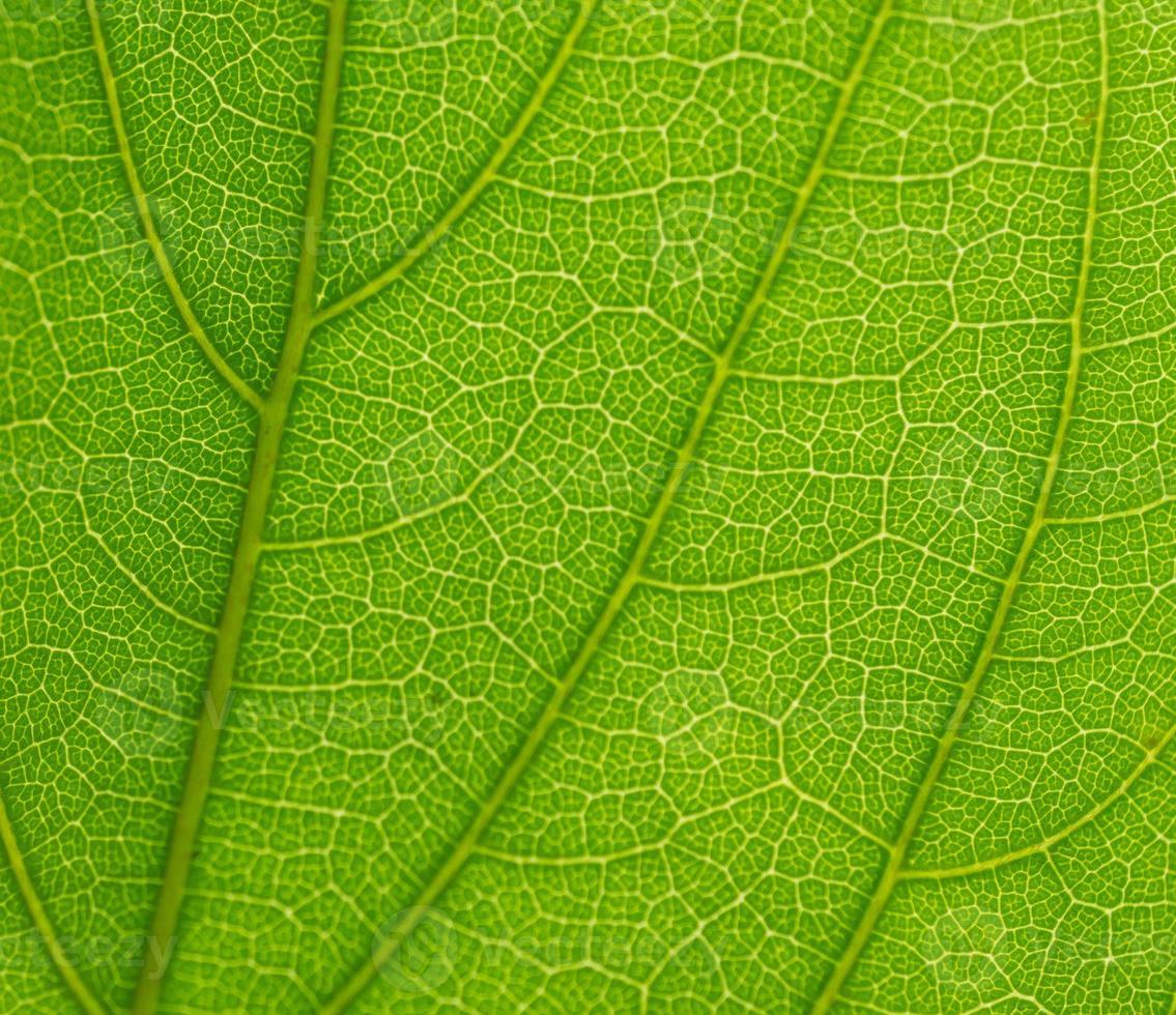 folha verde super detalhada foto