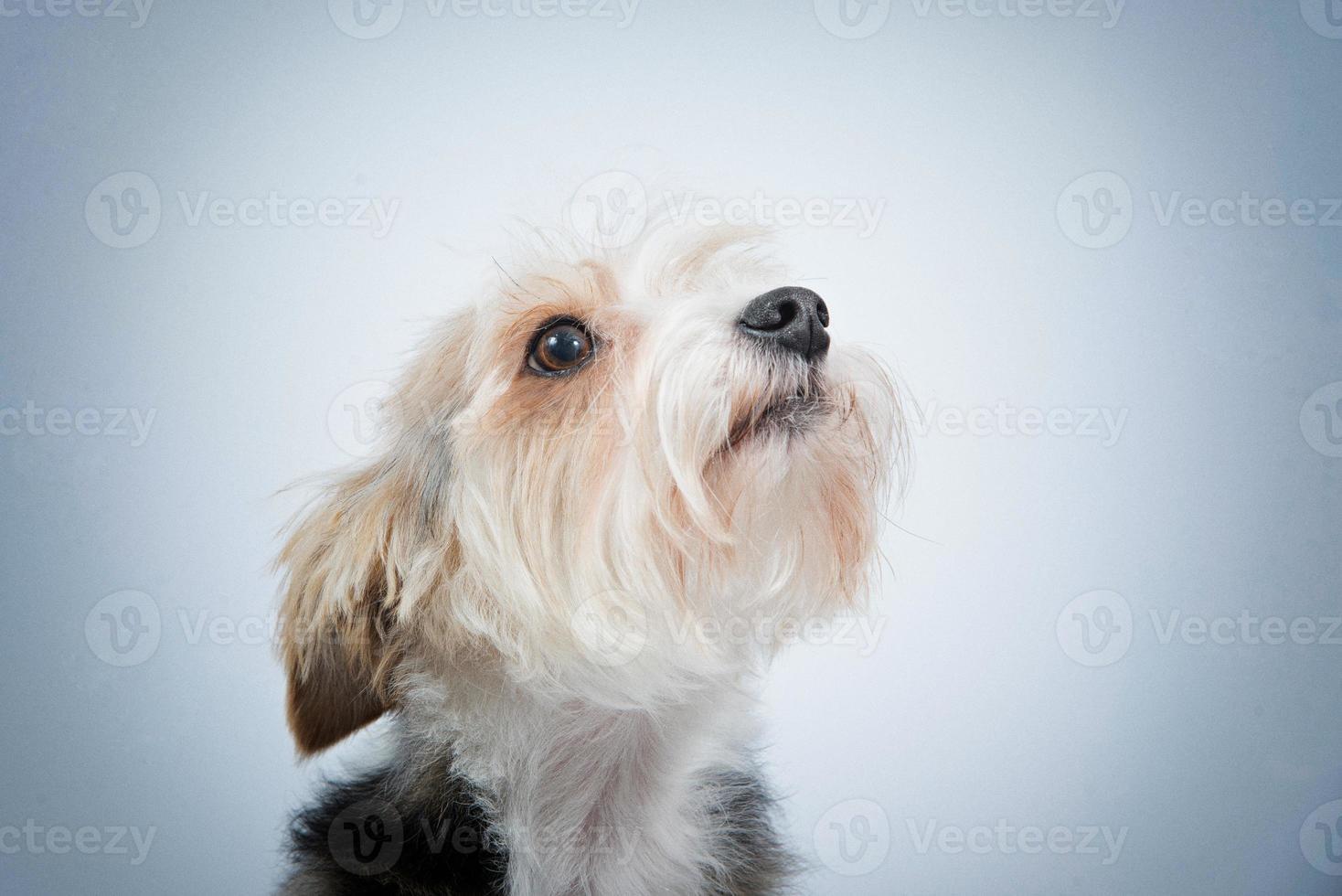 retrato de cachorro close-up foto