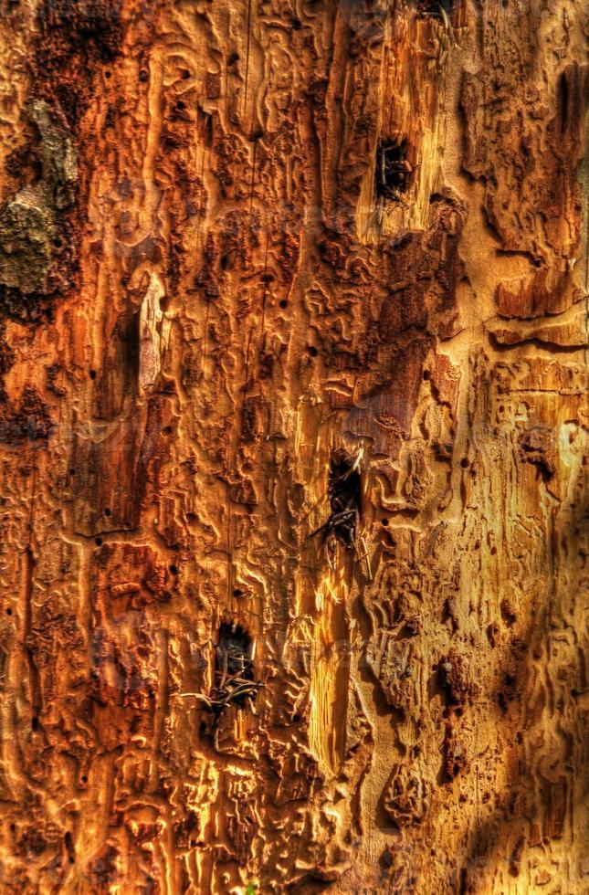 close-up de árvore doente foto