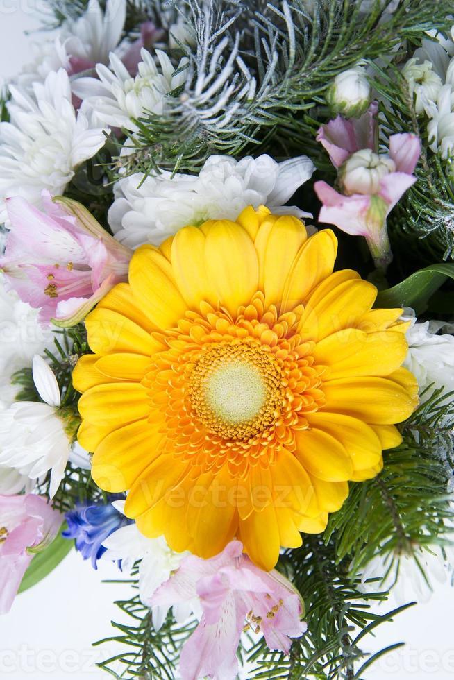 gerbera amarela close-up foto