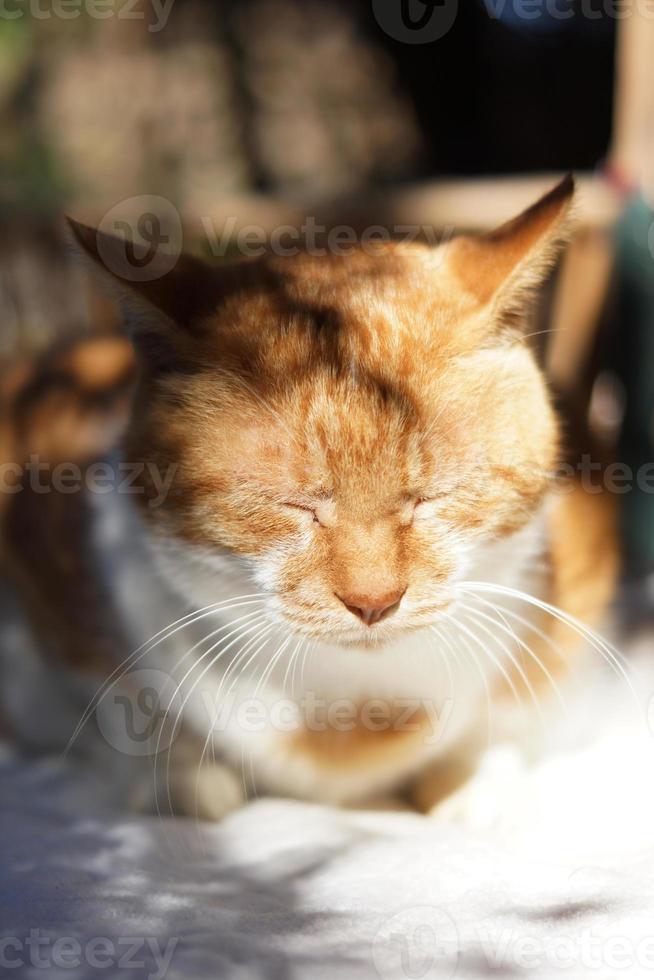 o gato que dorme foto