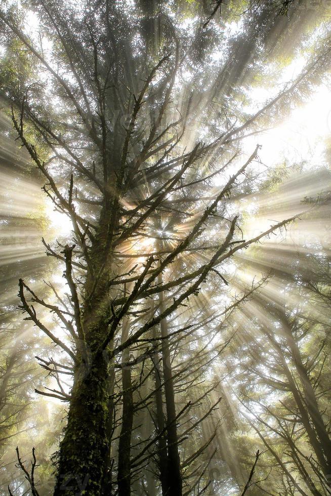 baum - árvore foto