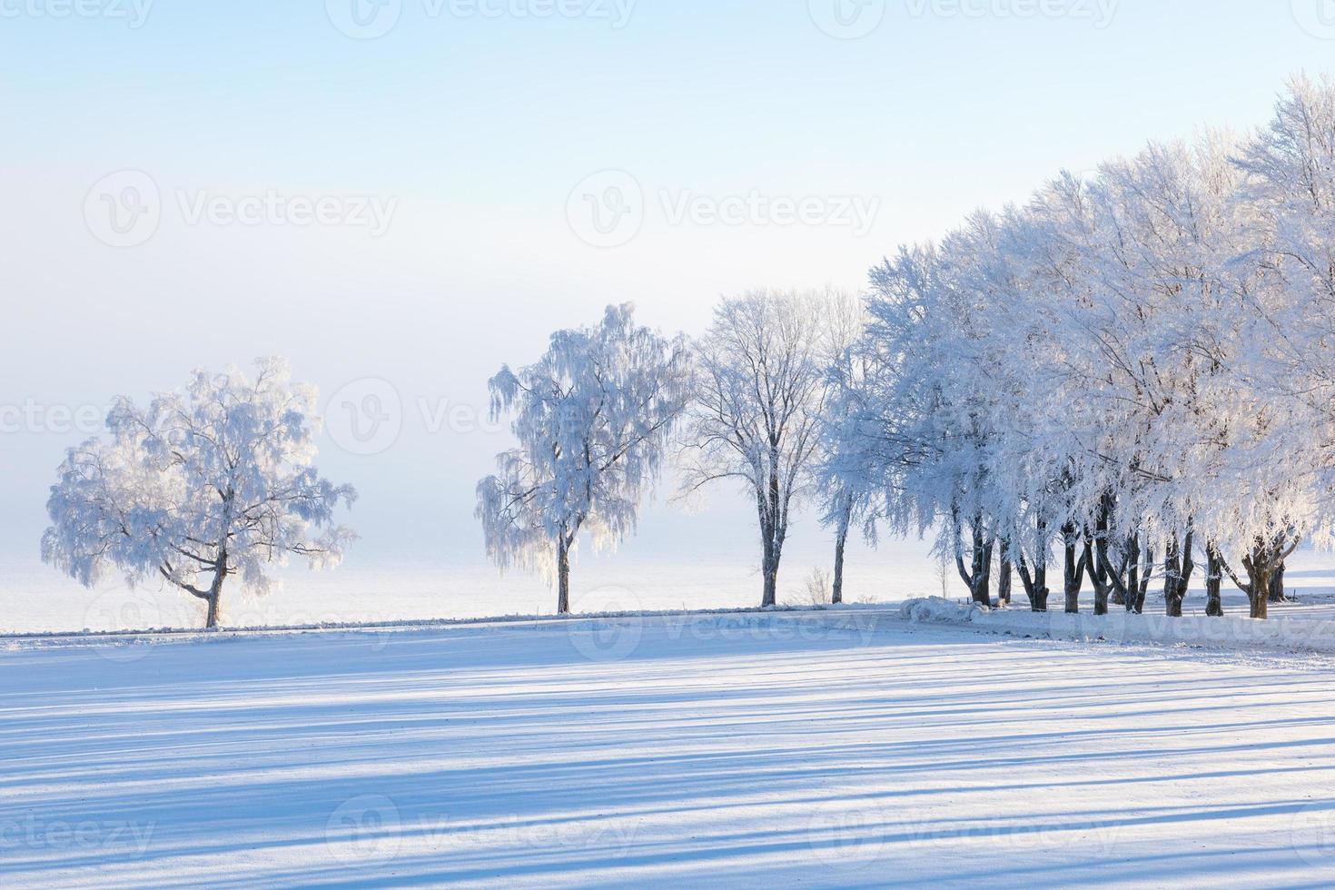 árvore de inverno foto