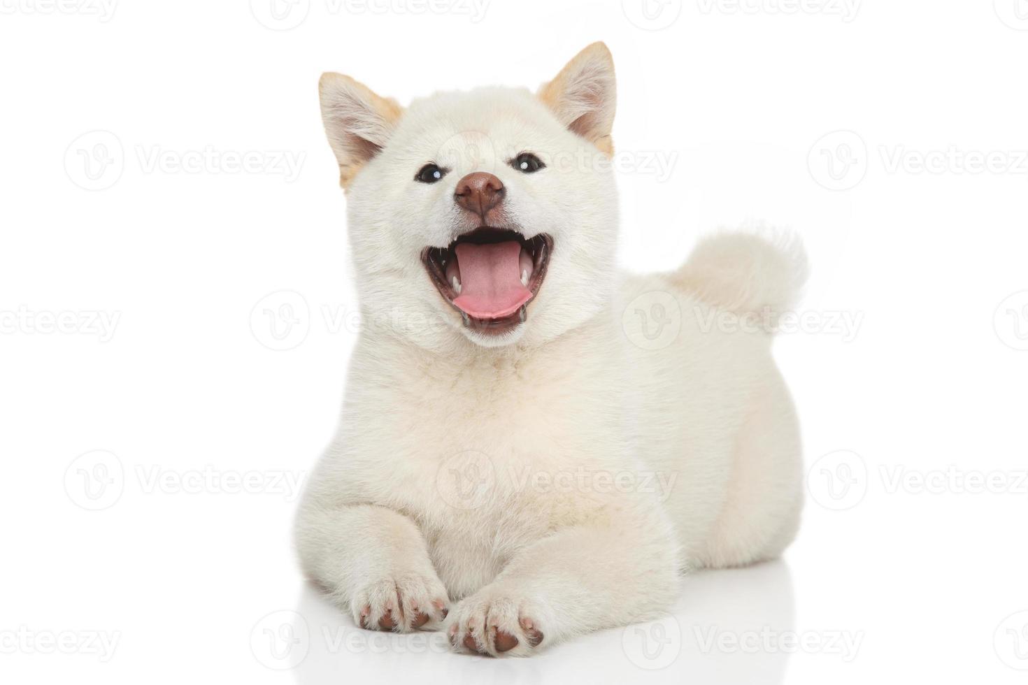 feliz cachorro shiba-inu foto