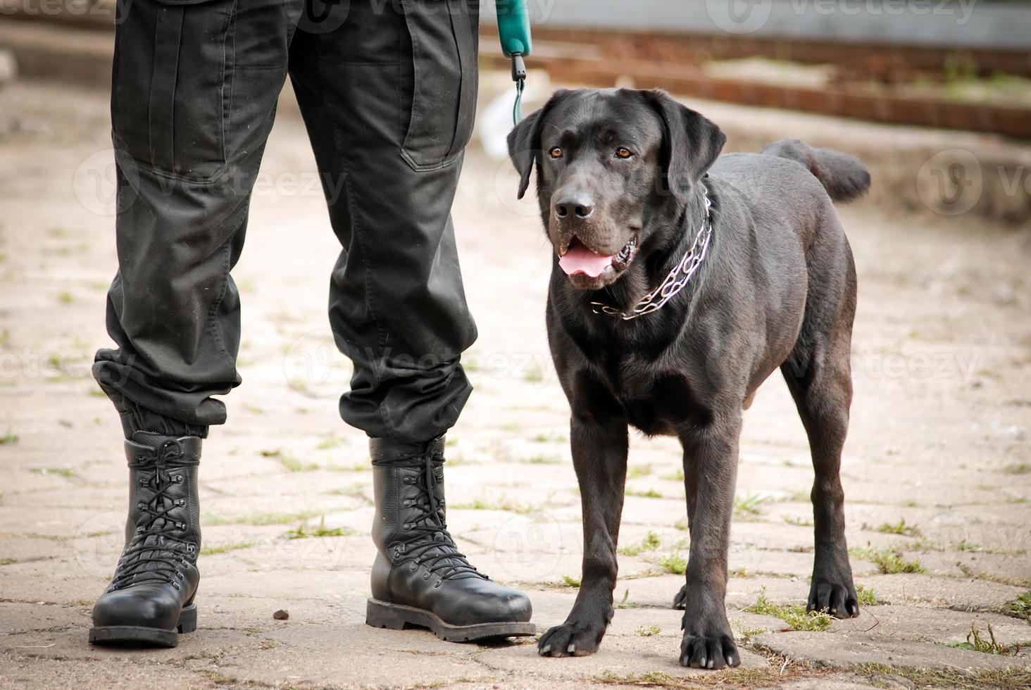 cão policial foto