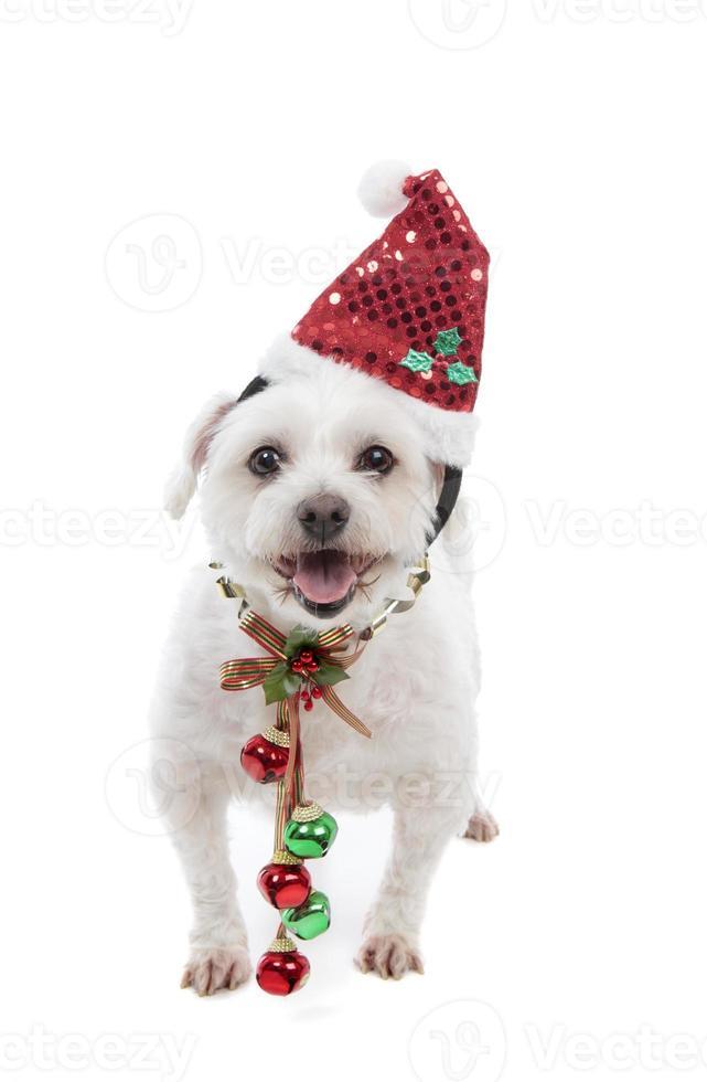 filhote de Natal festivo com guizos foto