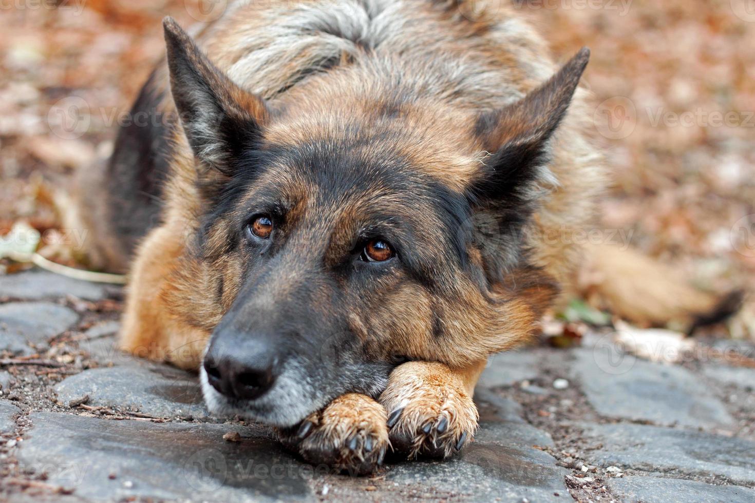 ausgesetzter hund foto