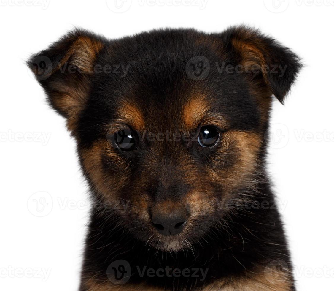 cachorro olhando tristemente na câmera foto