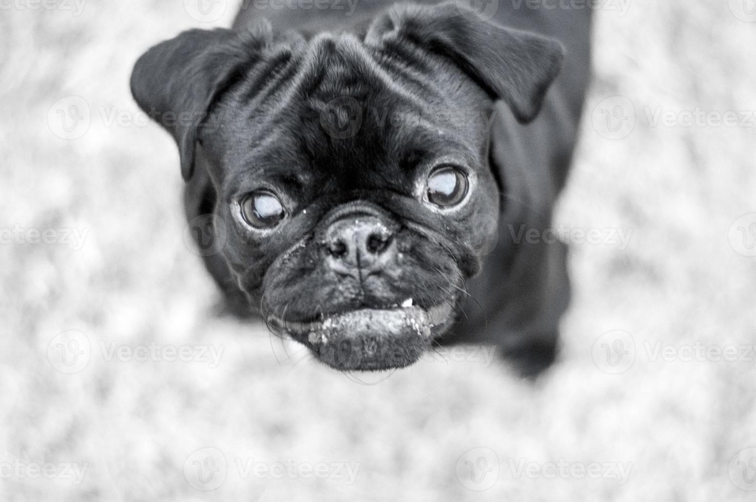 amor de cachorrinho foto