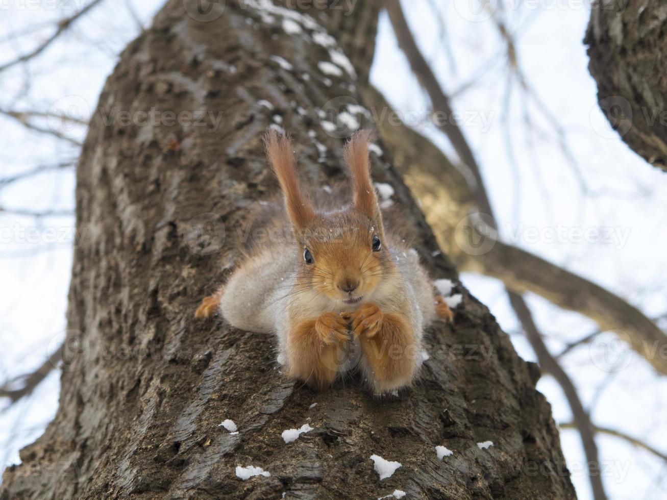 esquilo no parque gorky foto