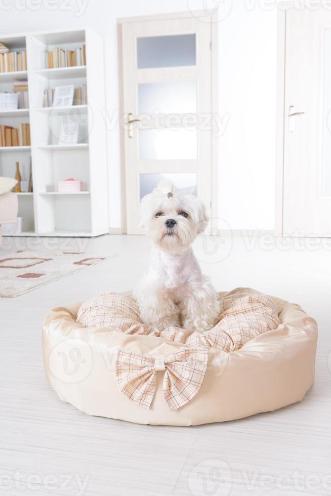cão na cama do cão foto