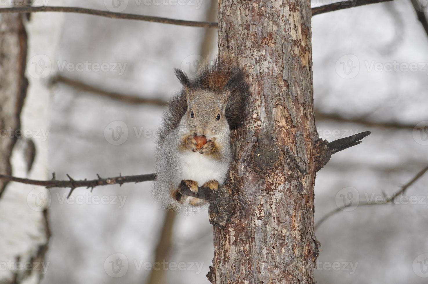 pequeno esquilo foto