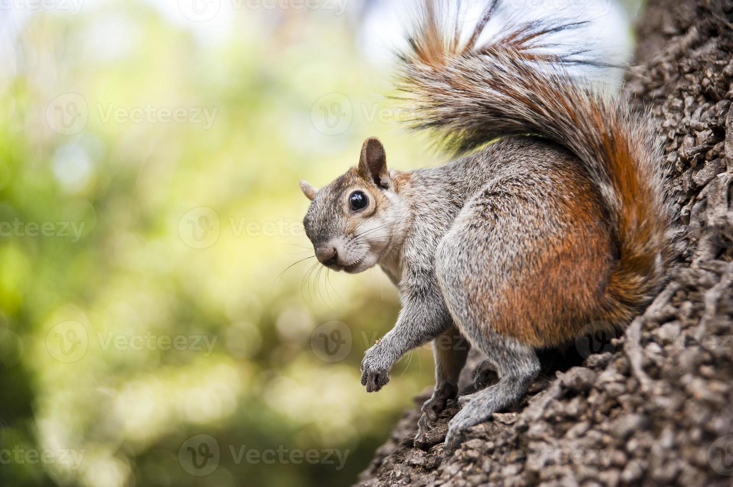 esquilo olhando foto