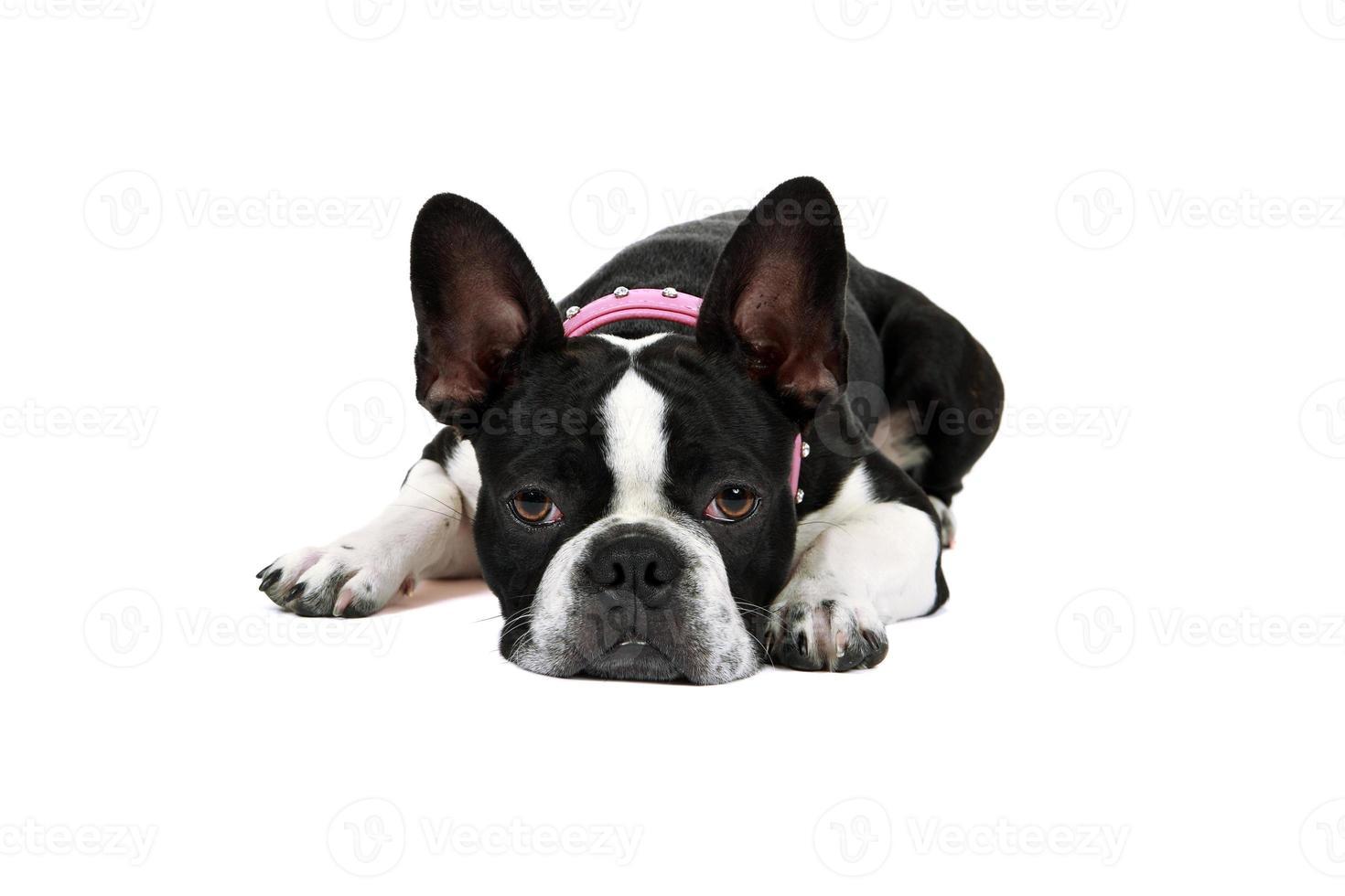 cachorro cansado foto