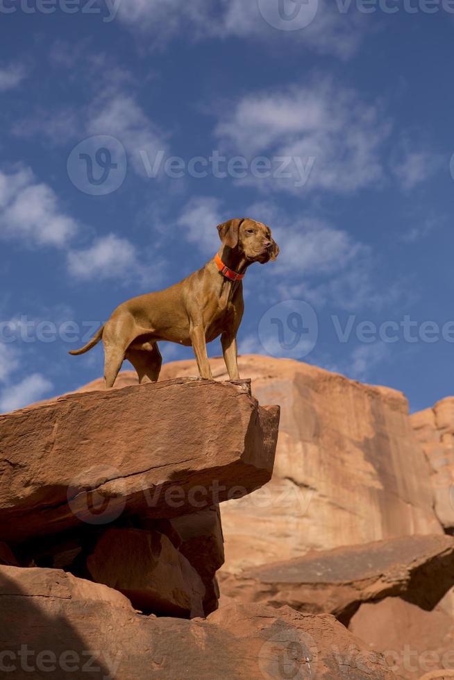 cachorro no topo da falésia foto
