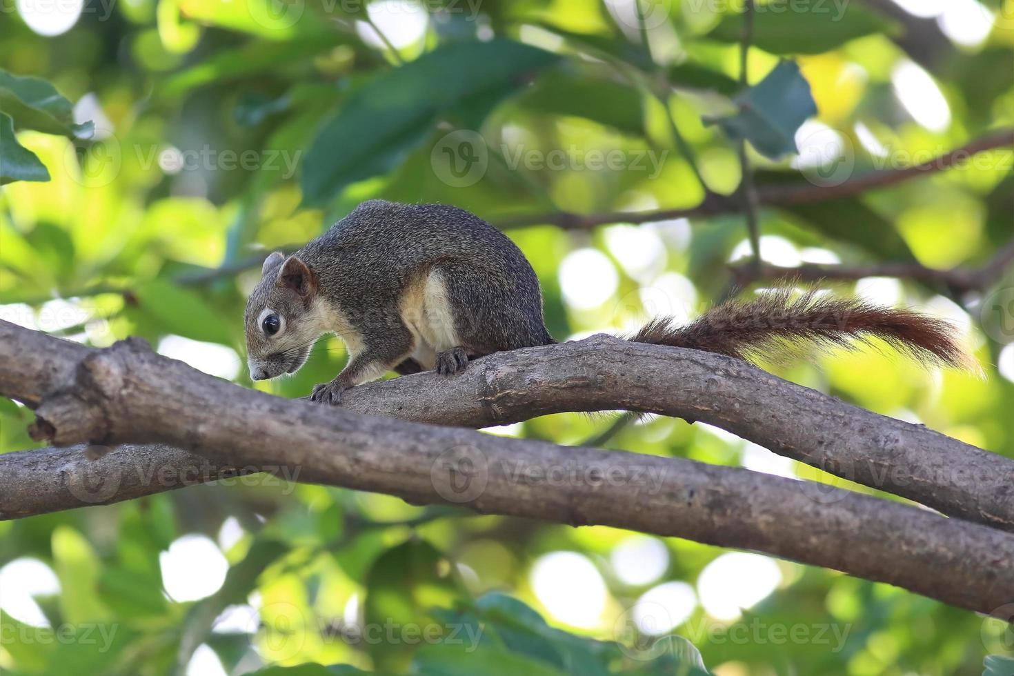 esquilo em um galho de árvore foto