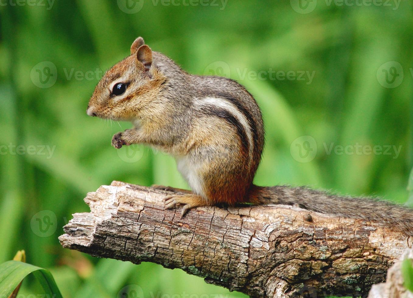 um close de um esquilo adorável sentado em um galho de árvore foto