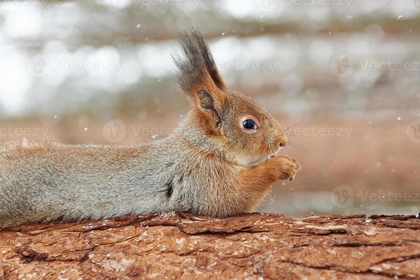 esquilo na árvore foto