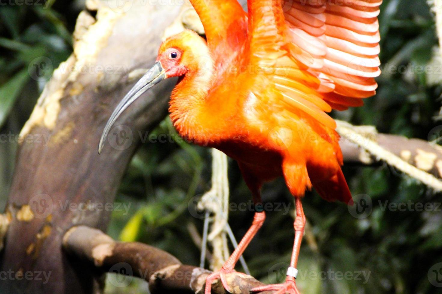 flamingo pequeno foto