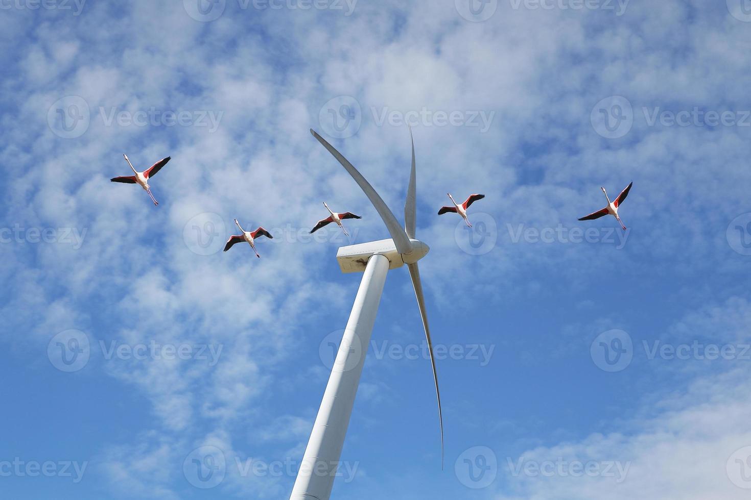 éolienne et flamants roses foto