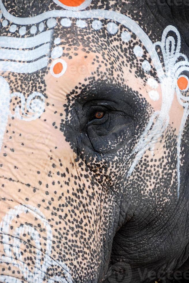 índia, kanchipuram, elefante hindu, close-up olho foto