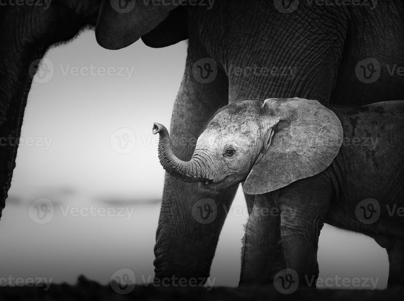 elefante bebê ao lado de vaca (processamento artístico) foto