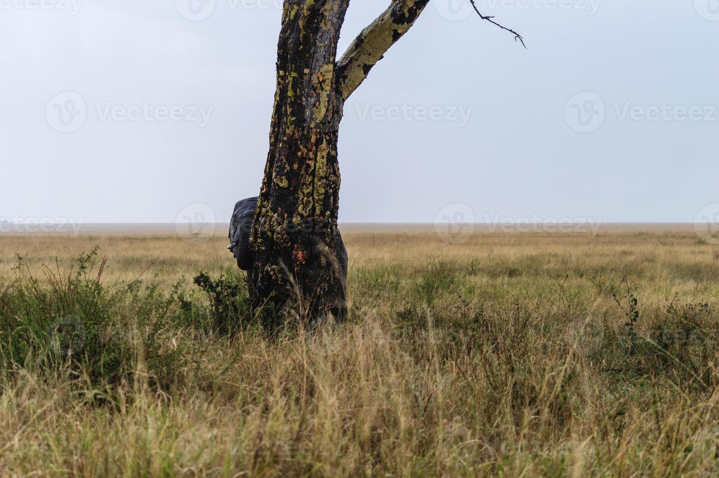 elefante escondido foto