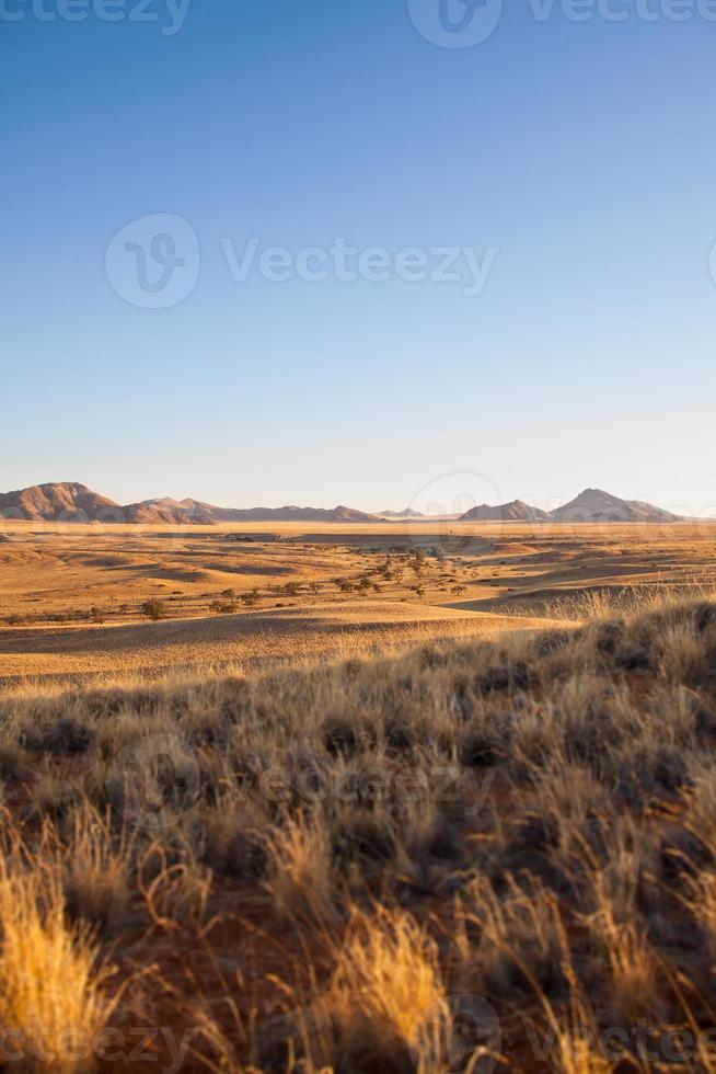 savana do parque nacional namib-naukluft, namíbia foto