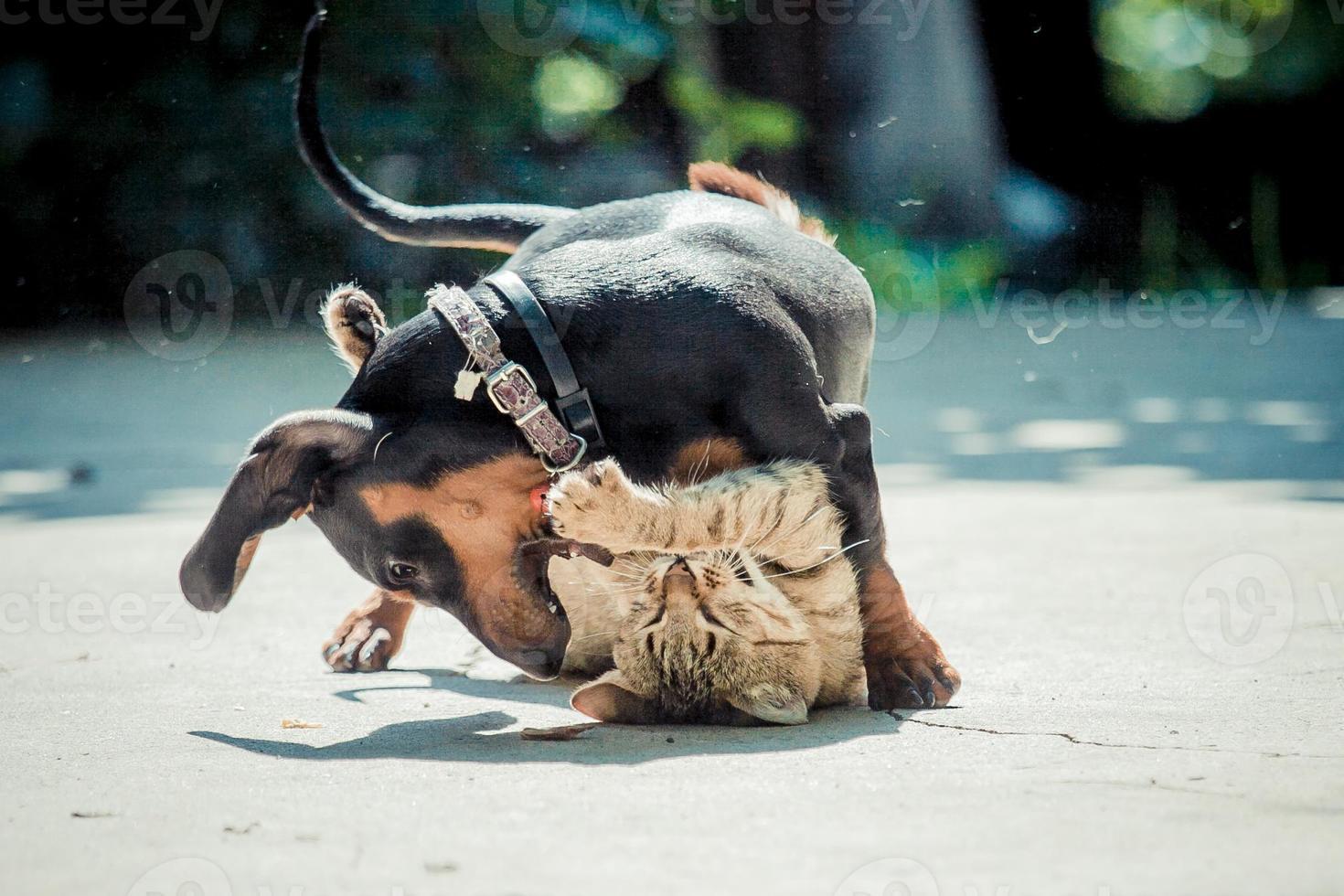 hund katze spiel foto