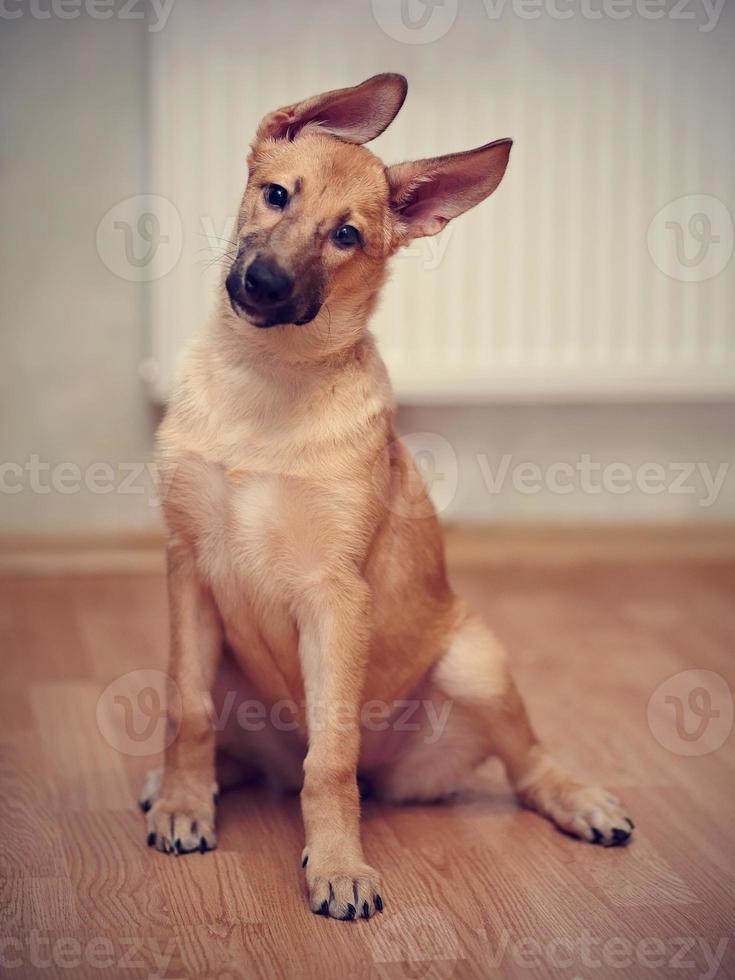divertido cachorro não puro-sangue. foto