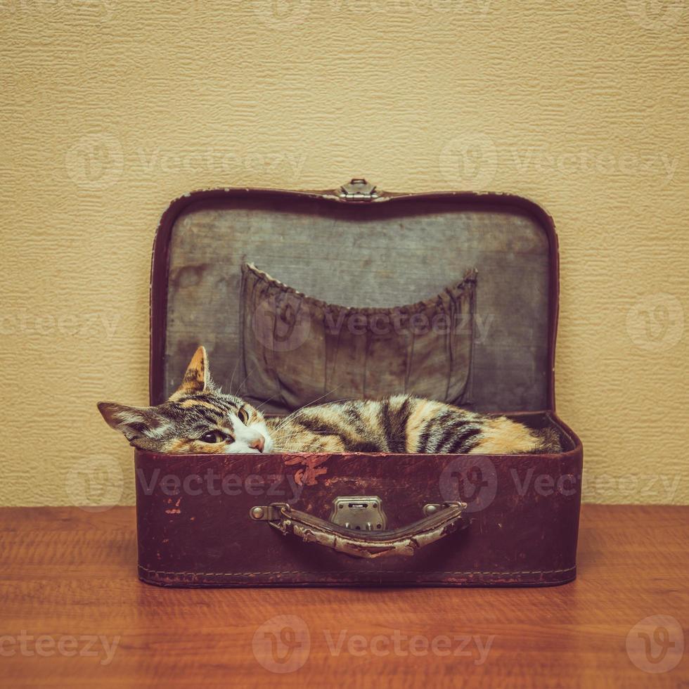 gato de cor de tartaruga em uma mala vintage foto