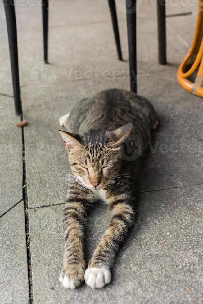 gato deitado para descansar. foto