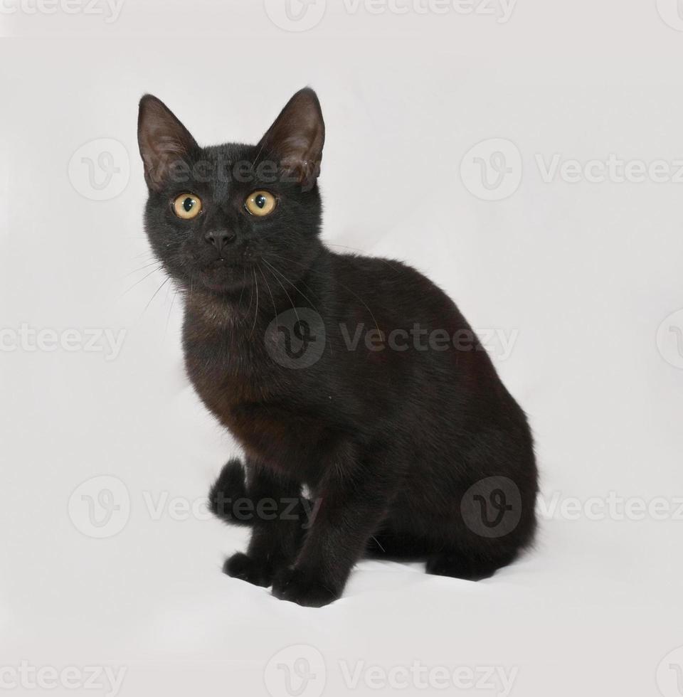 gatinho preto sentado no cinza foto