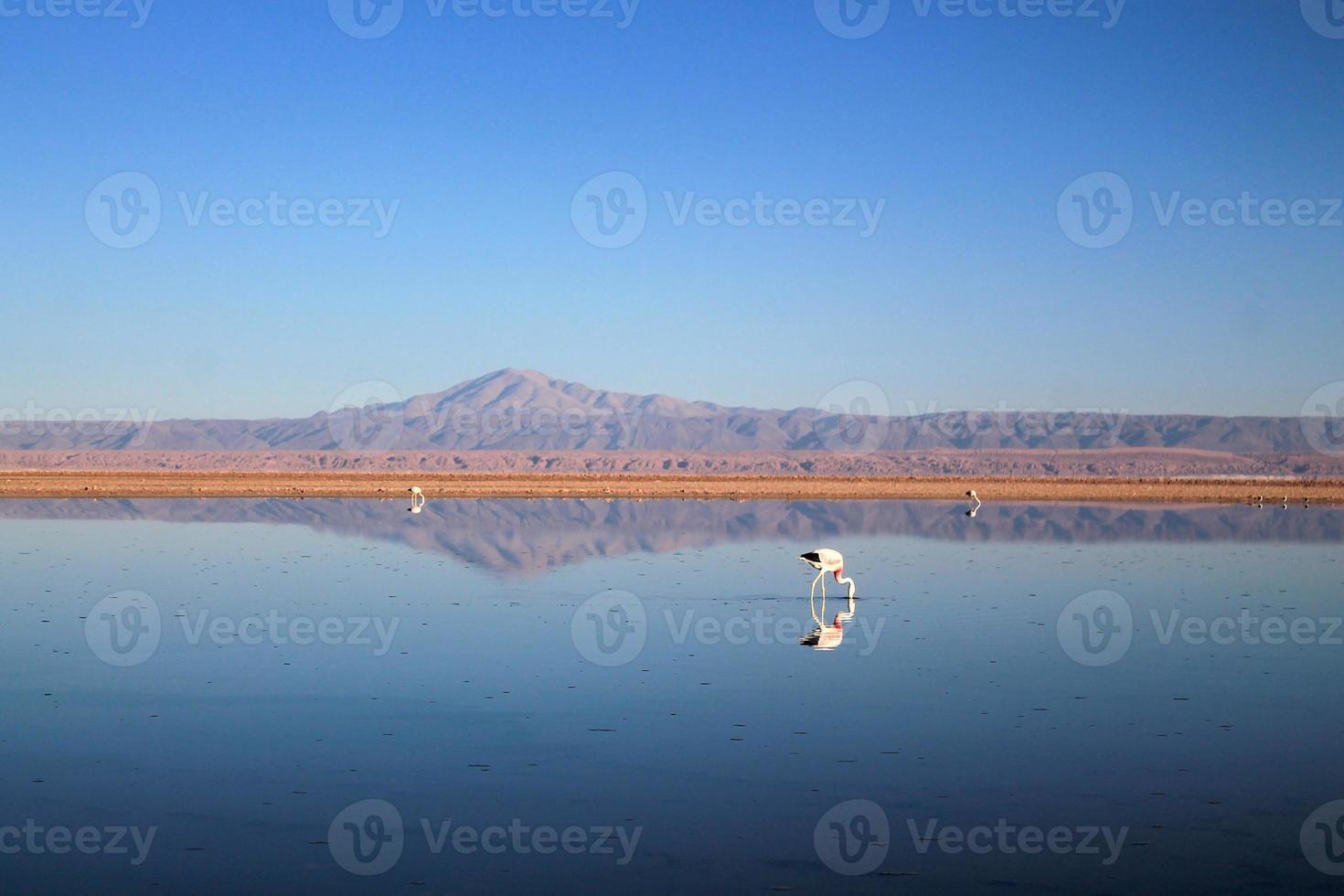 flamingos em um lago foto
