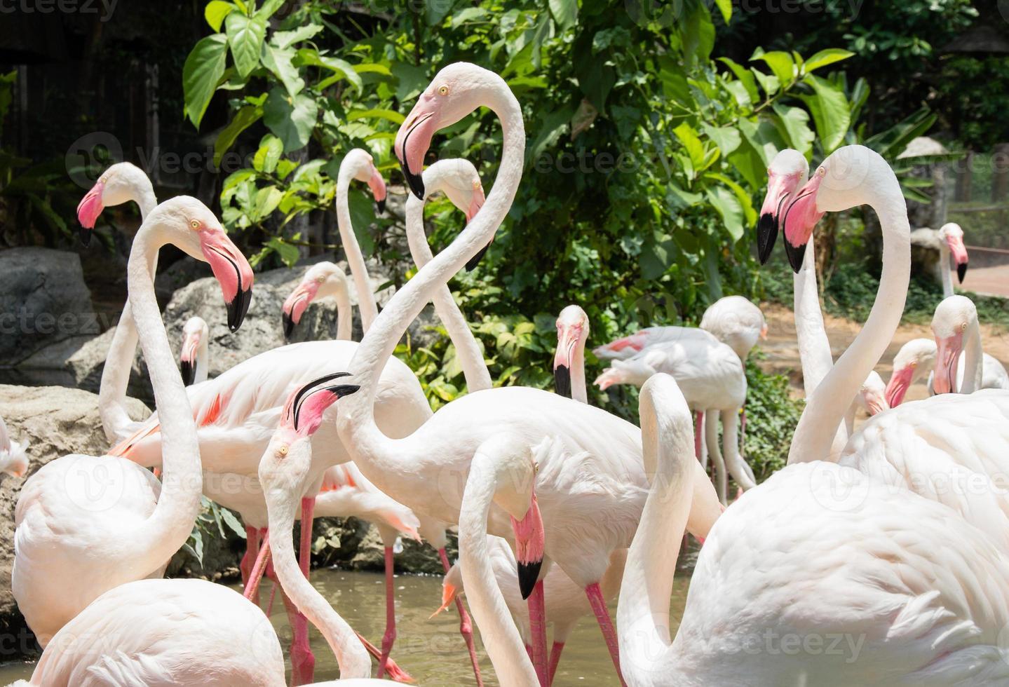 flamingo no zoológico foto