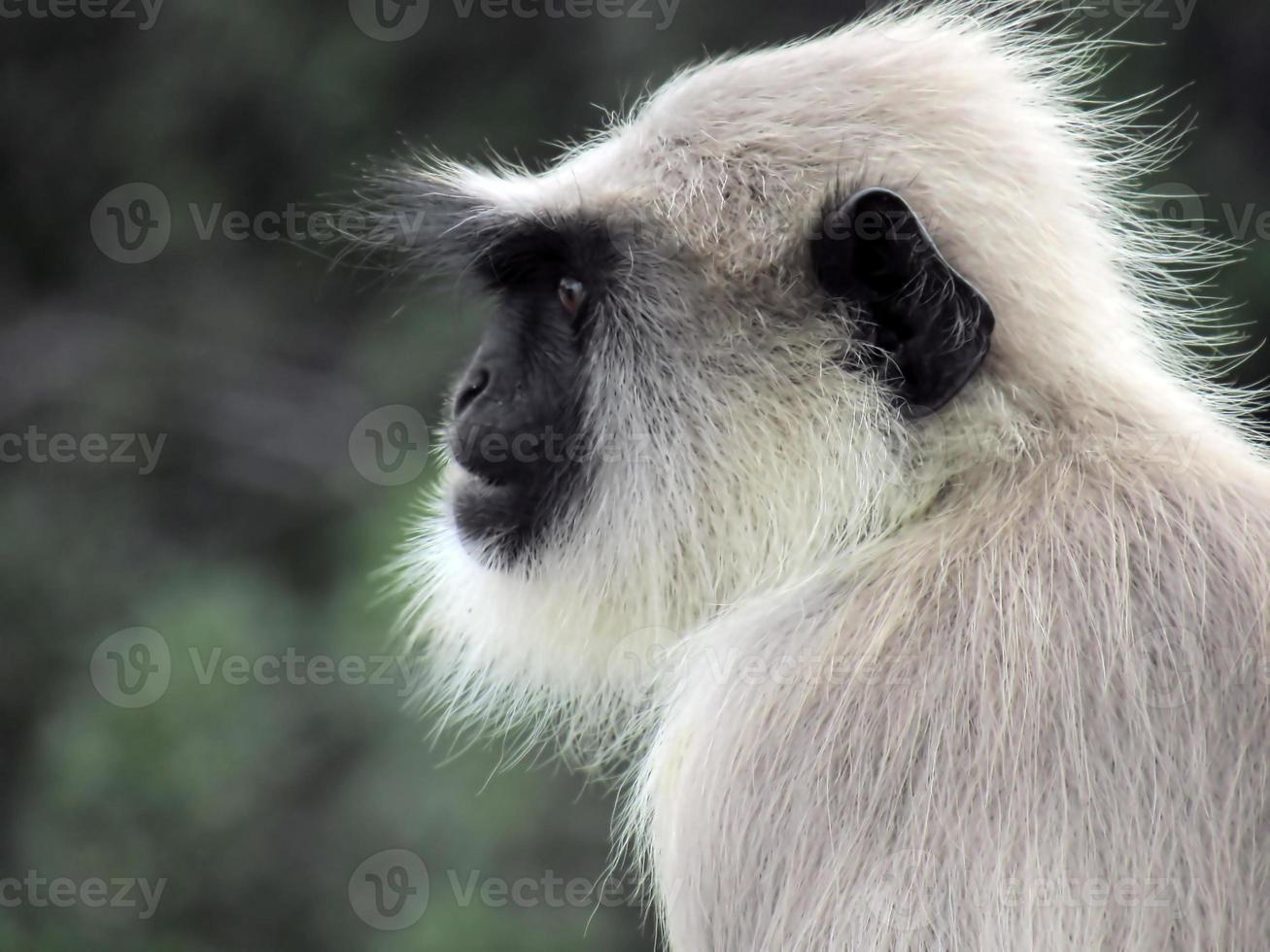 negócio de macaco foto