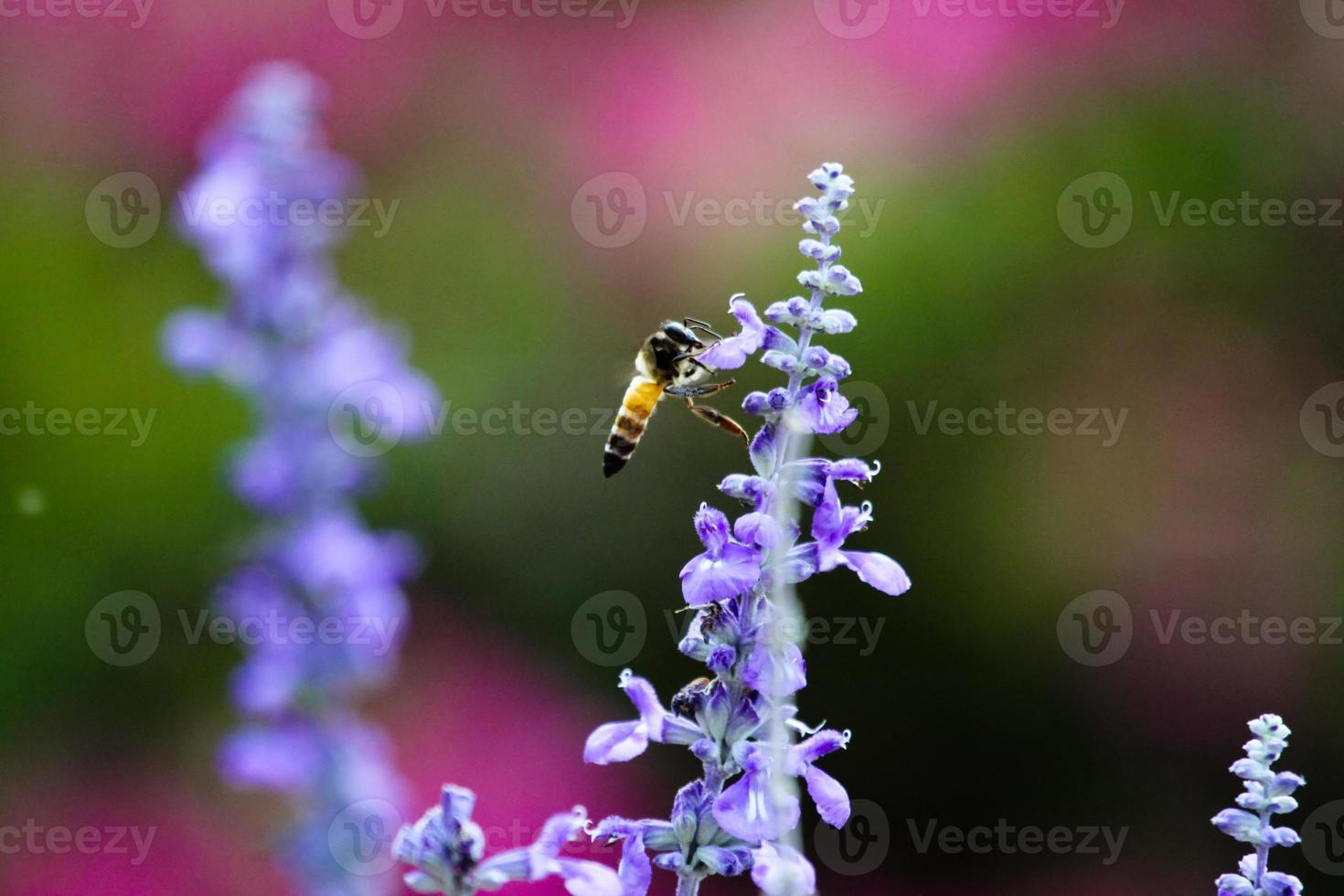abelha na natureza foto