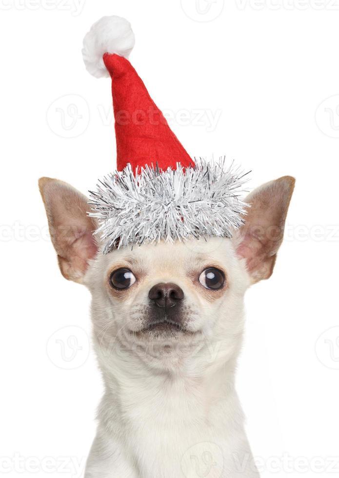 filhote de cachorro chihuahua no chapéu de Natal vermelho foto