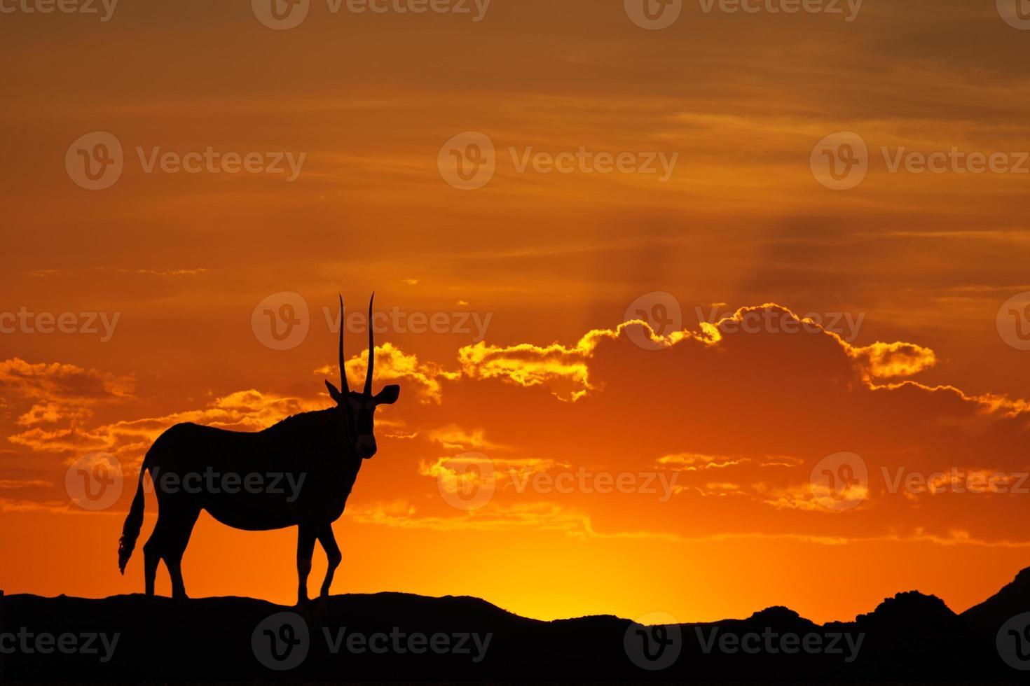 silhueta de gemsbok foto