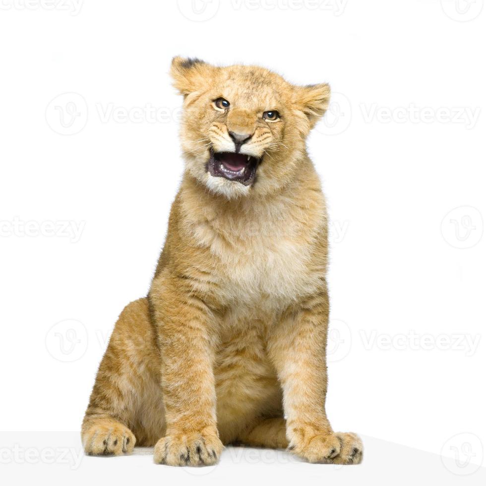 filhote de leão sentado foto