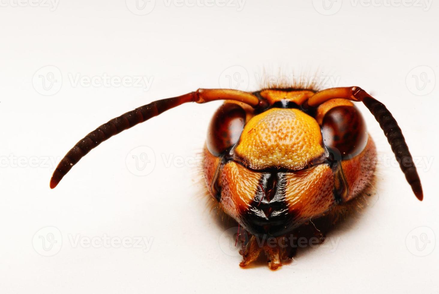 macro pequeno besouro foto