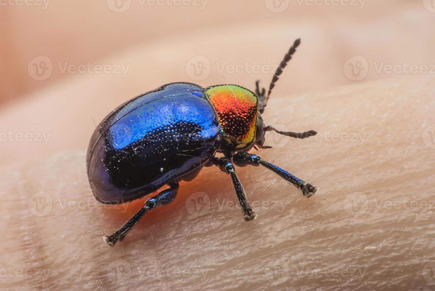 bug macro colorido foto