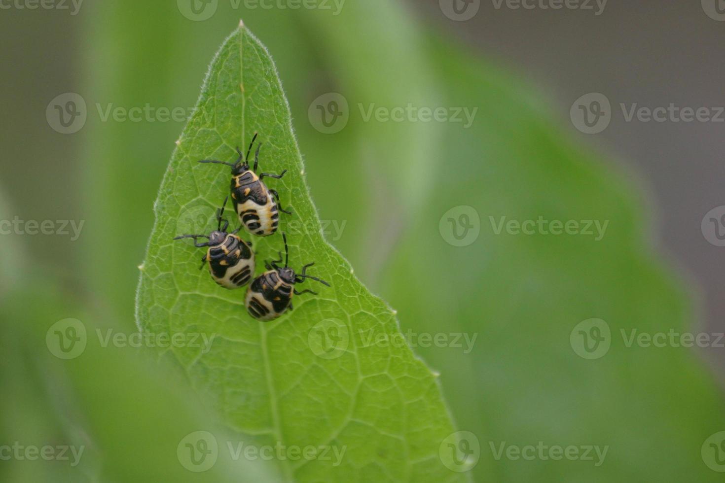 larvas de insetos foto