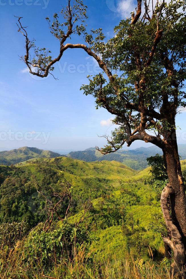 pico da montanha na floresta tropical foto