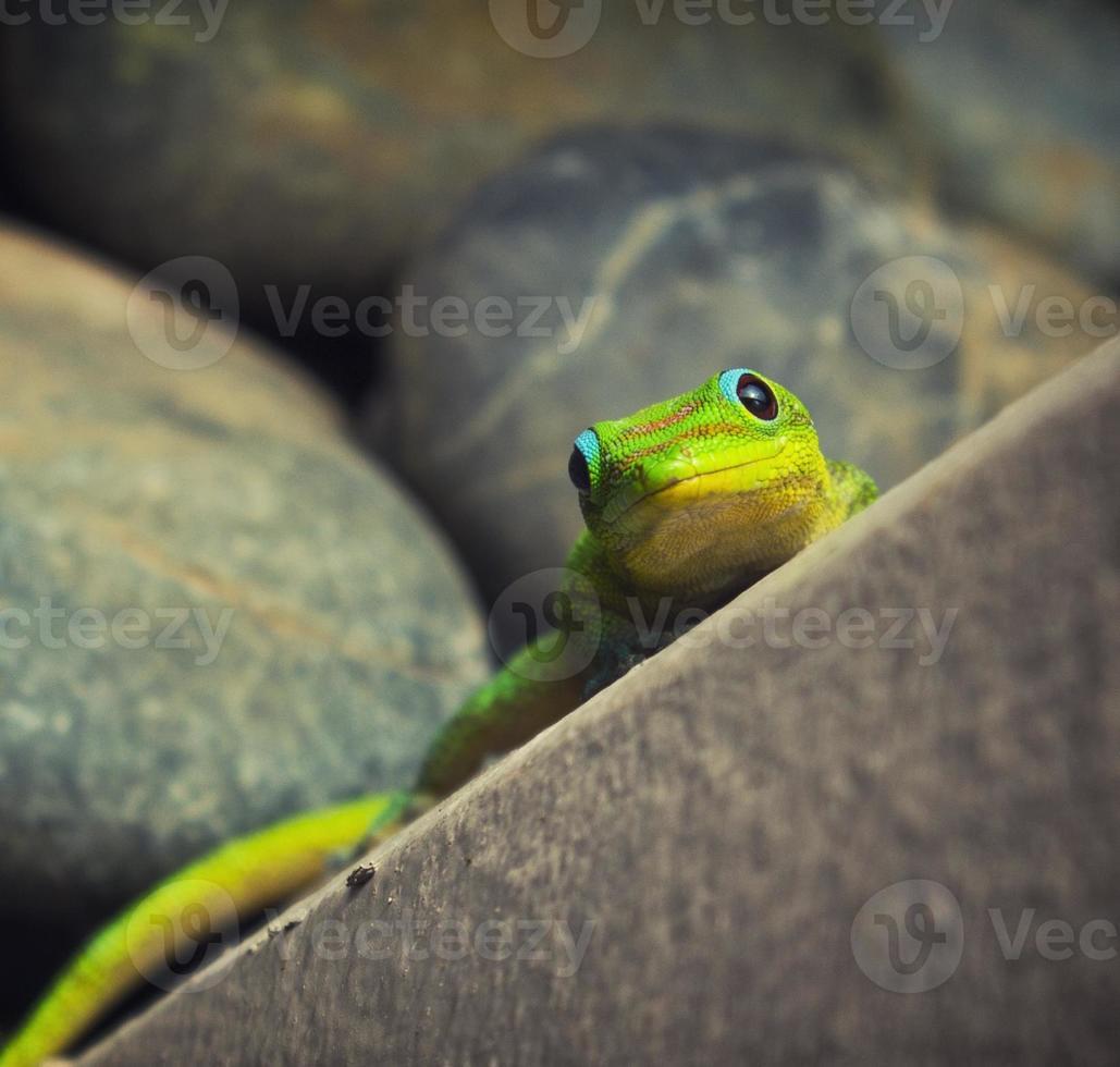 close-up tiro de uma lagartixa verde foto