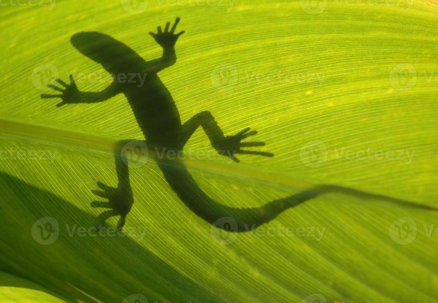 lagarto selvagem na folha de luz de fundo foto