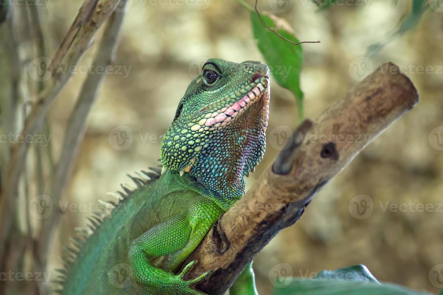 retrato de lagarto foto