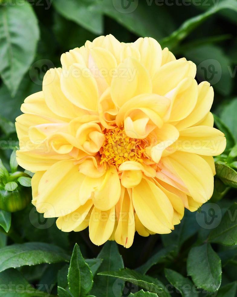 Flor amarela foto